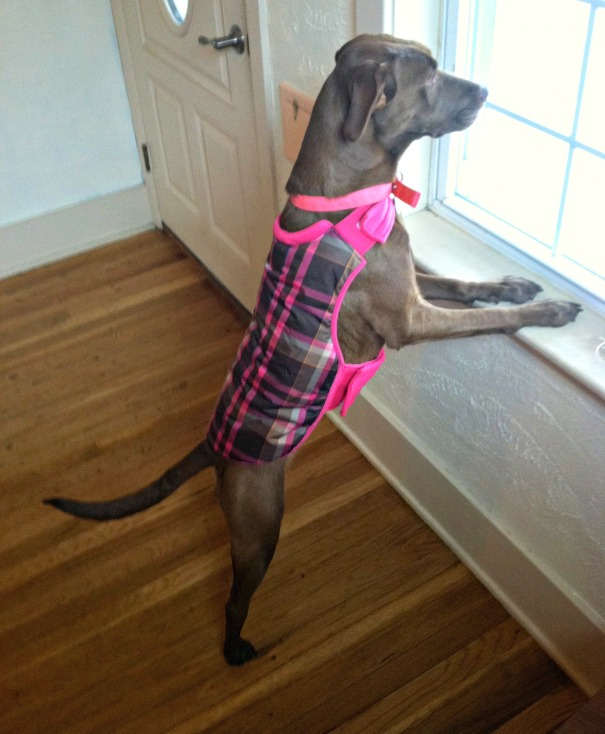 pippa in her pink coat