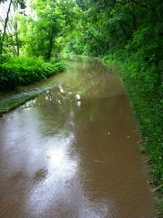 flooded root river trail