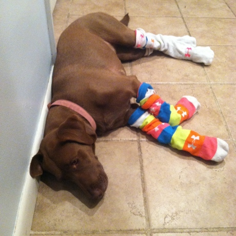 pippa under armour socks crossfit dog
