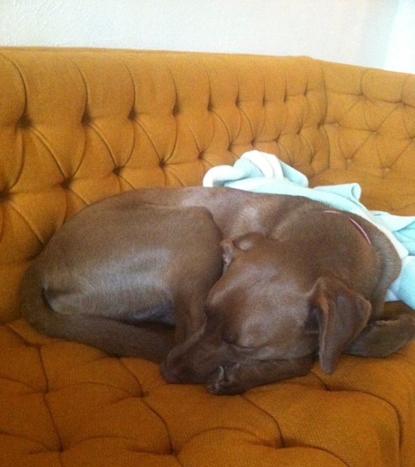 pippa on my yellow couch