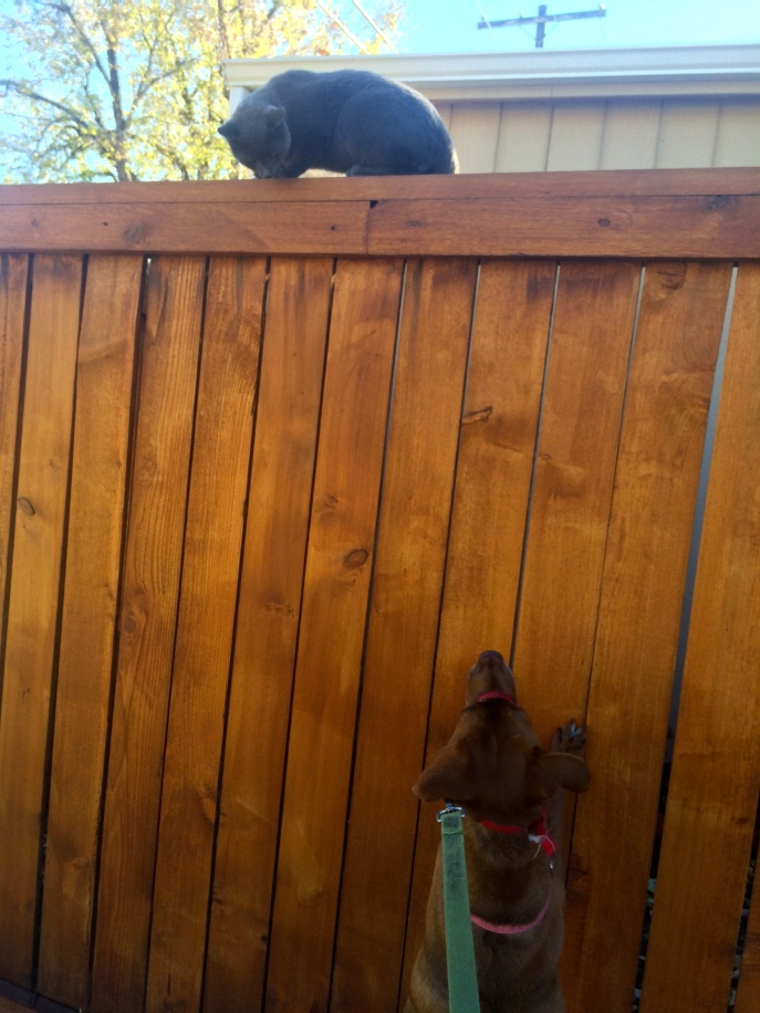 pippa and cat on fence