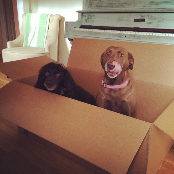 dogs in a box