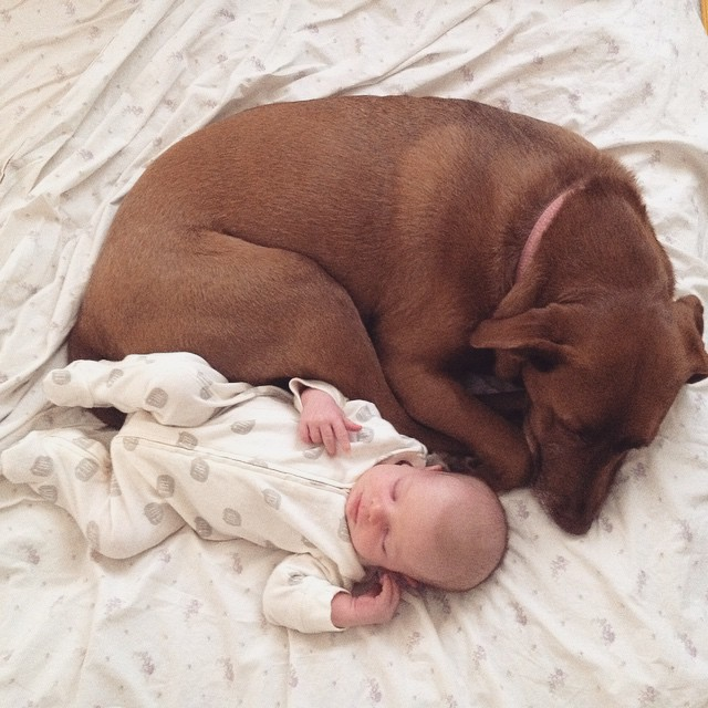baby and pippa
